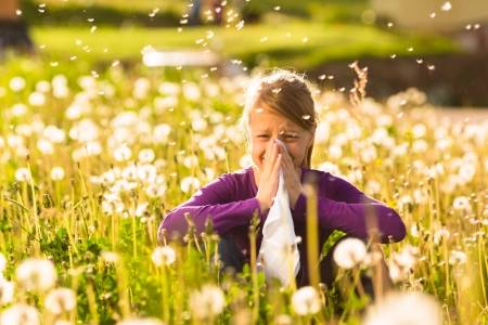 Image showing girl in field of dandelions sneezing. There are two main Aspergillus infections that directly involve allergy. One is ABPA and the other is allergic fungal rhinosinusitis.