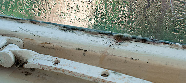 image showing mould on the windowsill of a damp home