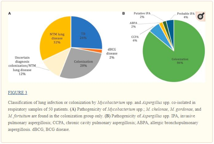 Classification of lung infection or colonization by Mycobacterium spp. and Aspergillus spp. co-isolated in respiratory samples of 50 patients.